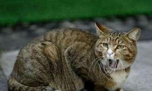 如何照顾年老猫的饮食及生活调整